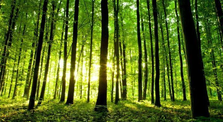 Questa immagine ha l'attributo alt vuoto; il nome del file è foreste.jpg