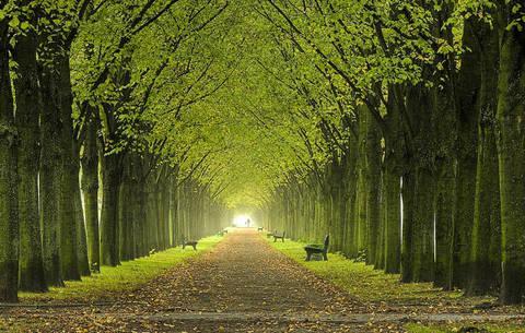 Questa immagine ha l'attributo alt vuoto; il nome del file è Giornata-nazionale-degli-alberi_articleimage.jpg