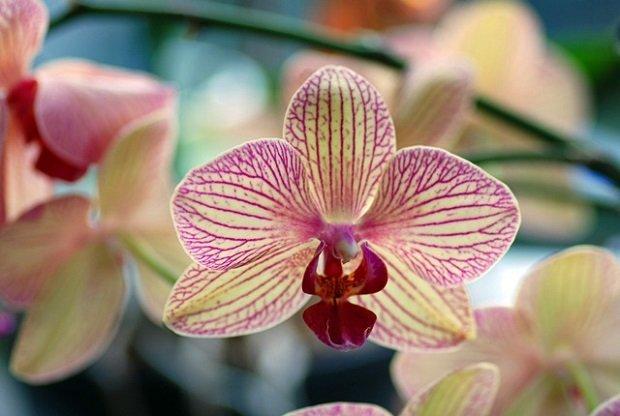 Questa immagine ha l'attributo alt vuoto; il nome del file è curare-orchidee.jpg