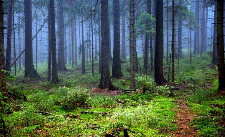 Questa immagine ha l'attributo alt vuoto; il nome del file è foreste-22-1.jpg